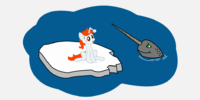 Narwhal 404